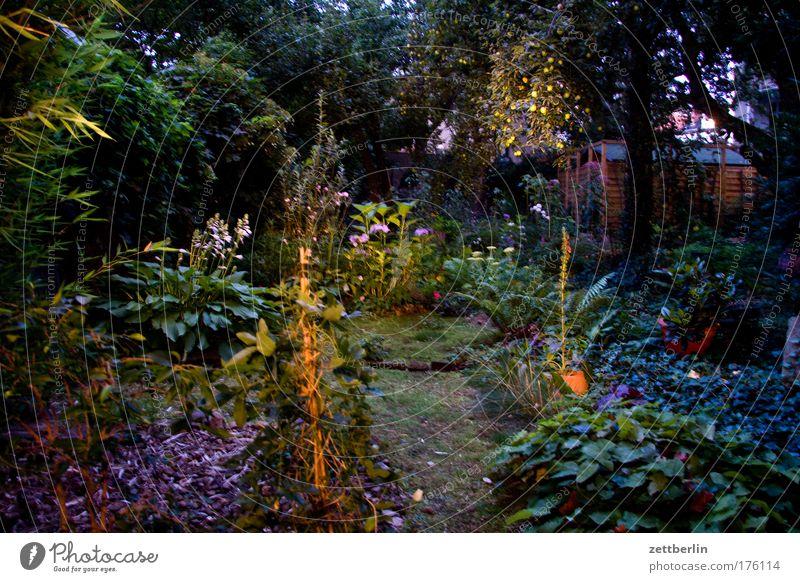 In The Garden Garten Pflanze Baum Blume Sträucher Moos Blüte Gefühle Märchen Kulisse Farbfoto Außenaufnahme Abend Nacht Totale fantastisch Surrealismus