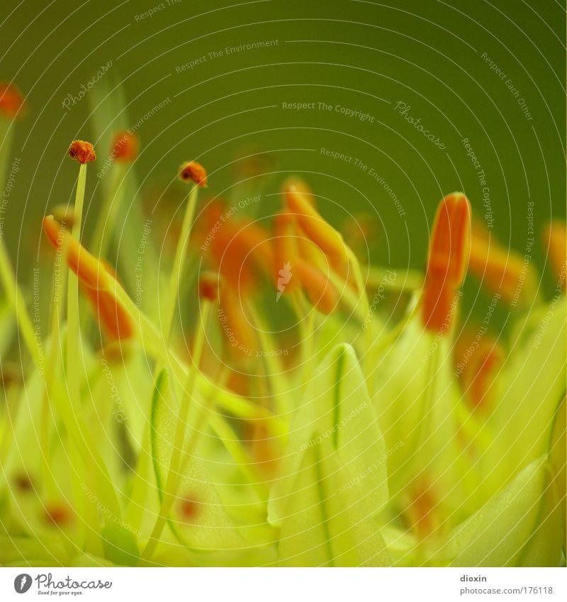 terrestial life #3 Natur Blume grün Pflanze Sommer gelb Blüte Frühling Park Umwelt ästhetisch natürlich außergewöhnlich Blühend Duft Makroaufnahme