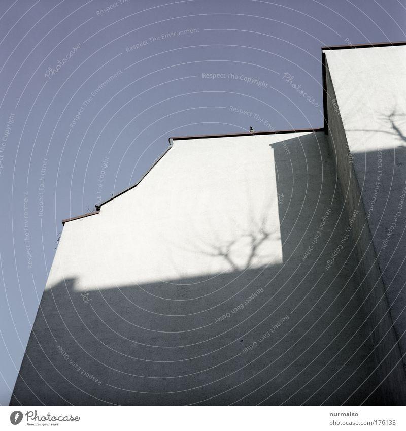 Schattengewächs Farbfoto Haus Renovieren Kunst Skulptur Umwelt Winter Altstadt Bauwerk Gebäude Architektur Mauer Wand Fassade Dach Dachrinne beobachten Blick