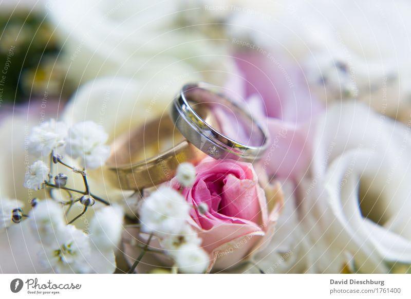 Weddingtime weiß Blume Blüte Liebe Glück Zusammensein rosa glänzend Romantik Zeichen Hochzeit violett Rose Blumenstrauß Vertrauen Verliebtheit