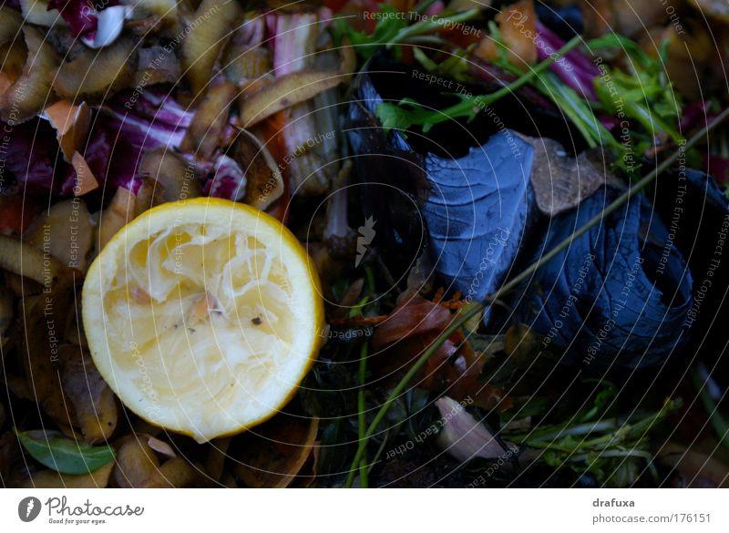 Kompost oder Die Ästhetik des Vergänglichen Sommer Tod Umwelt Wachstum Biomasse Vergänglichkeit Verfall