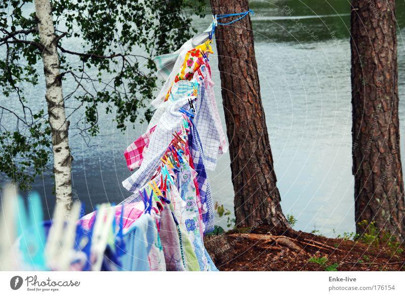 clothesline Natur Baum Kunst Arbeit & Erwerbstätigkeit fliegen Ordnung Energie Klima Perspektive authentisch Häusliches Leben einzigartig außergewöhnlich