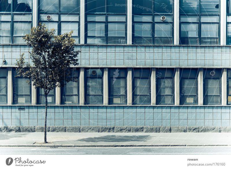 bäumlein Farbfoto Gedeckte Farben Außenaufnahme Tag Haus Bauwerk Gebäude Architektur Mauer Wand Fassade retro blau Baum stark Siebziger Jahre Raster Wachstum