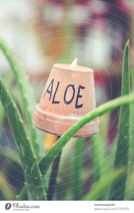 Aloe Wellness Pflanze schön Haus ruhig Leben Lifestyle Gesundheit Spielen Garten elegant Körper Blühend Vergänglichkeit Wohlgefühl harmonisch Körperpflege