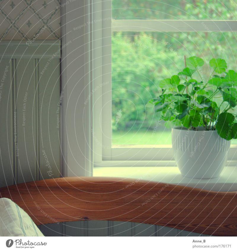 Harmonie in Grün Grünpflanze Topfpflanze Fenster Fensterrahmen Tapete Dekoration & Verzierung Stuhllehne Holz Linie ästhetisch einfach schön grün weiß ruhig