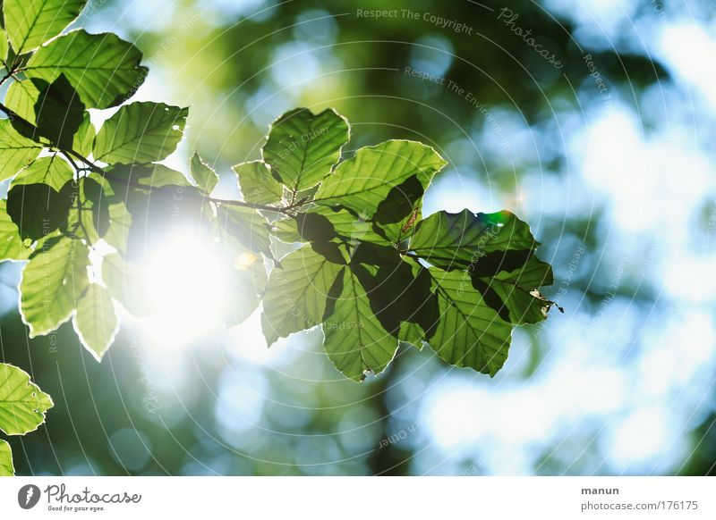 Im Blätterwald Natur blau grün Baum Sonne Sommer Blatt ruhig Erholung Umwelt Frühling Park Zufriedenheit glänzend ästhetisch leuchten