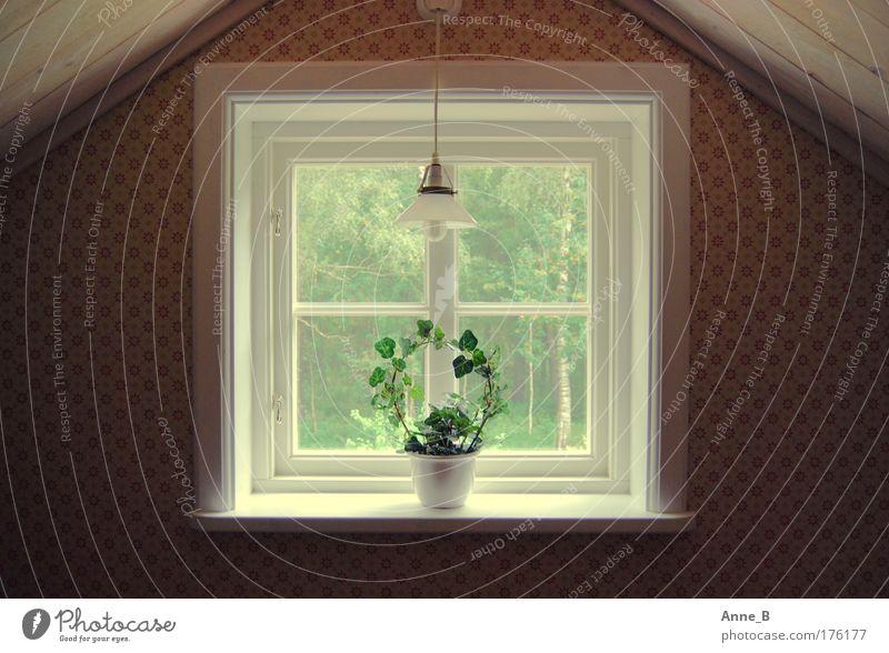 Schwedische Symmetrie schön weiß grün gelb Lampe Wand Fenster Garten Holz Mauer Zufriedenheit braun Raum Wohnung Sicherheit ästhetisch