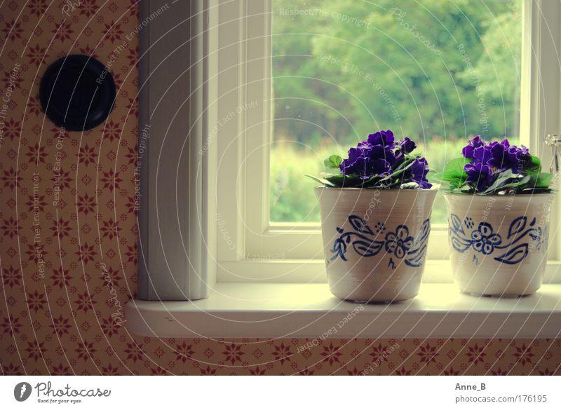 Swedish Flower Power blau weiß grün schön rot Pflanze Blume Haus ruhig gelb Fenster Wärme Holz Blüte Garten Wohnung