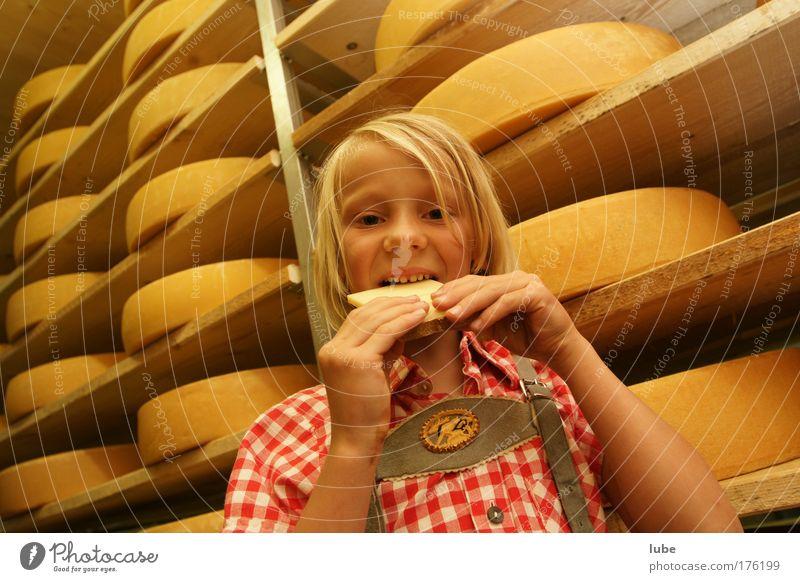 Alles Käse Kind Mädchen Lebensmittel Essen Gesundheit Kindheit blond Tourismus Zähne Alpen Übergewicht Mund Käse Ernährung Keller Vegetarische Ernährung