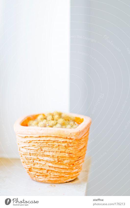 kakken | 550 Farbfoto Innenaufnahme Textfreiraum oben Licht High Key Schwache Tiefenschärfe Häusliches Leben Dekoration & Verzierung Pflanze Kaktus Grünpflanze