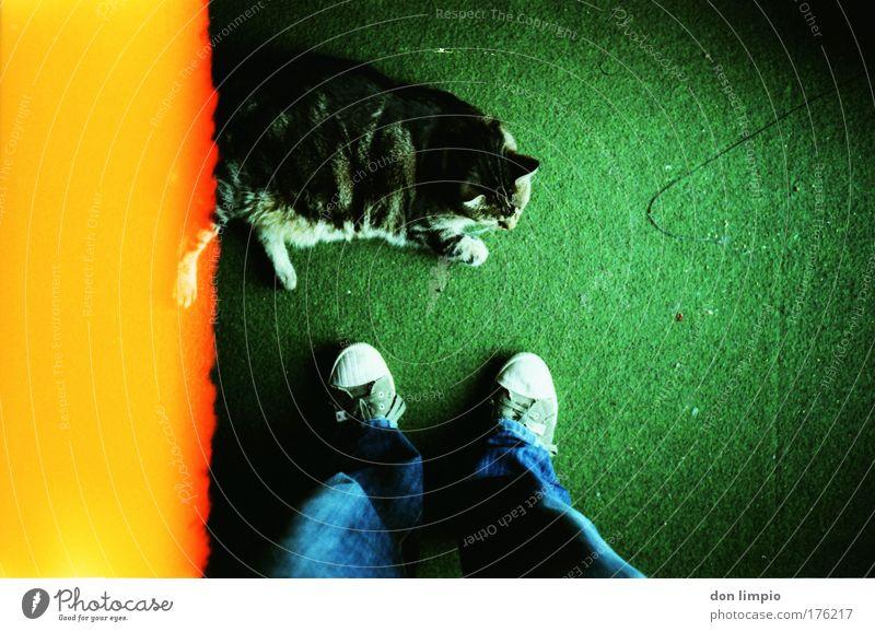 fauler kater Katze grün gelb Schuhe Jeanshose Haustier Teppich