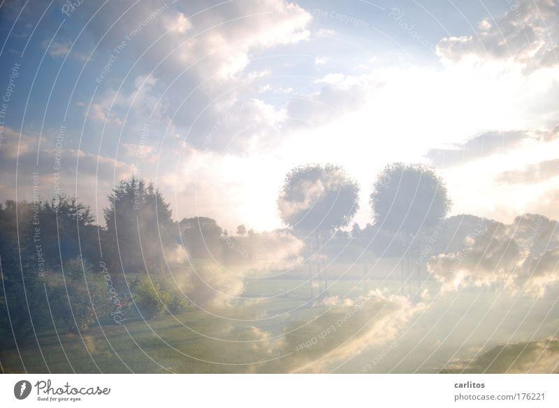 lucy in the sky with diamonds Baum ruhig Wolken Freiheit träumen hell ästhetisch Romantik Klima Unendlichkeit außergewöhnlich Himmel leuchten Rauschmittel Surrealismus Fernweh