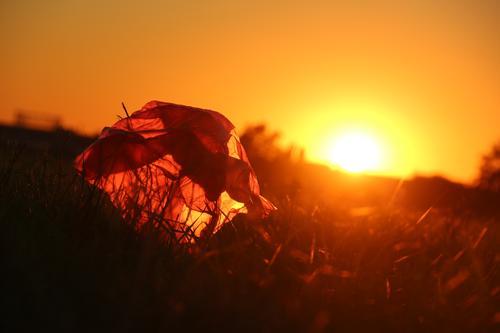 Naturplastik Sommer Sonne Landschaft rot Umwelt gelb Berlin Stimmung gold Zukunft Klima kaufen Reinigen Kunststoff Zukunftsangst