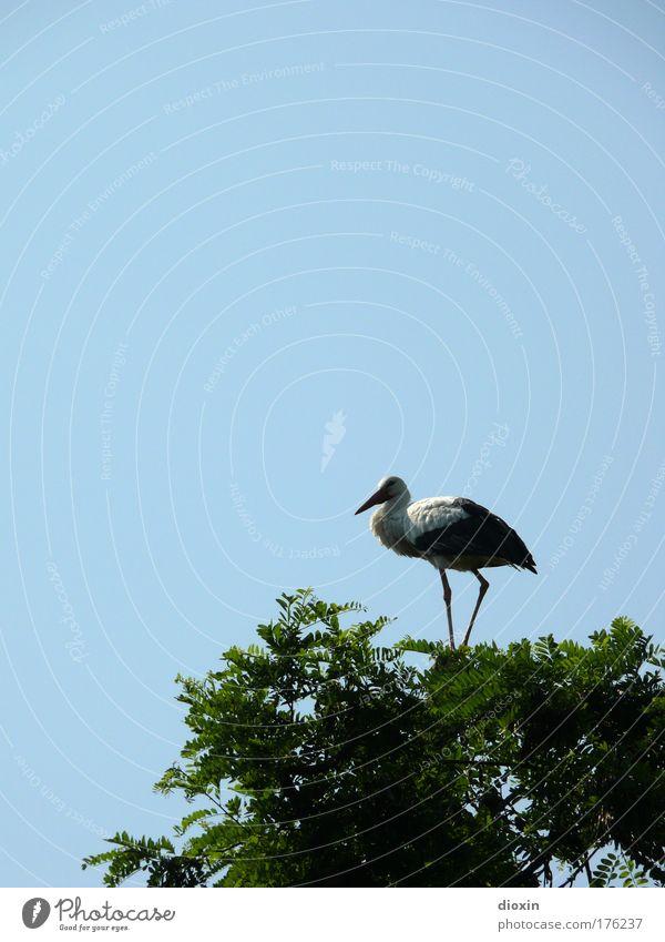 absoluter Überblick Himmel Natur Baum Pflanze Sommer Tier Blatt Umwelt Vogel Park Wildtier natürlich ästhetisch stehen Flügel beobachten