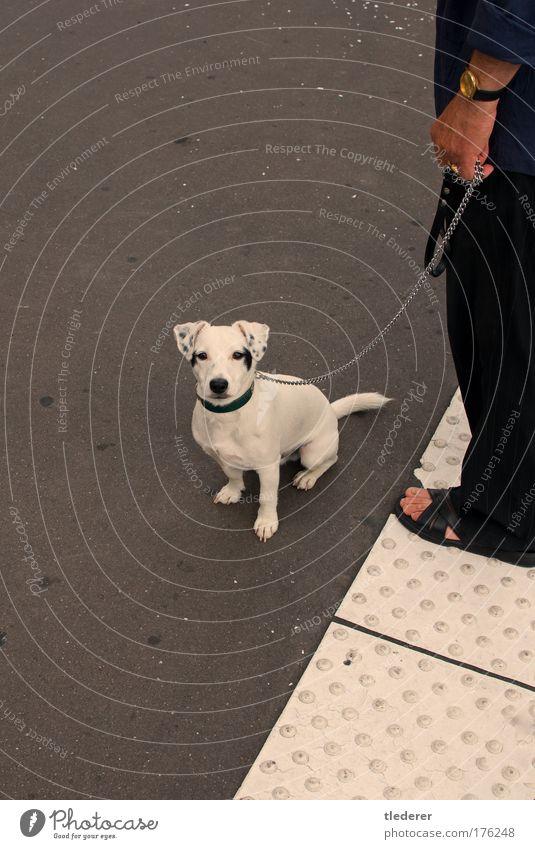 Hund in Paris Farbfoto Außenaufnahme Textfreiraum links Morgen Tierporträt Blick nach unten Haustier 1 beobachten grau weiß Optimismus Einsamkeit Kommunizieren