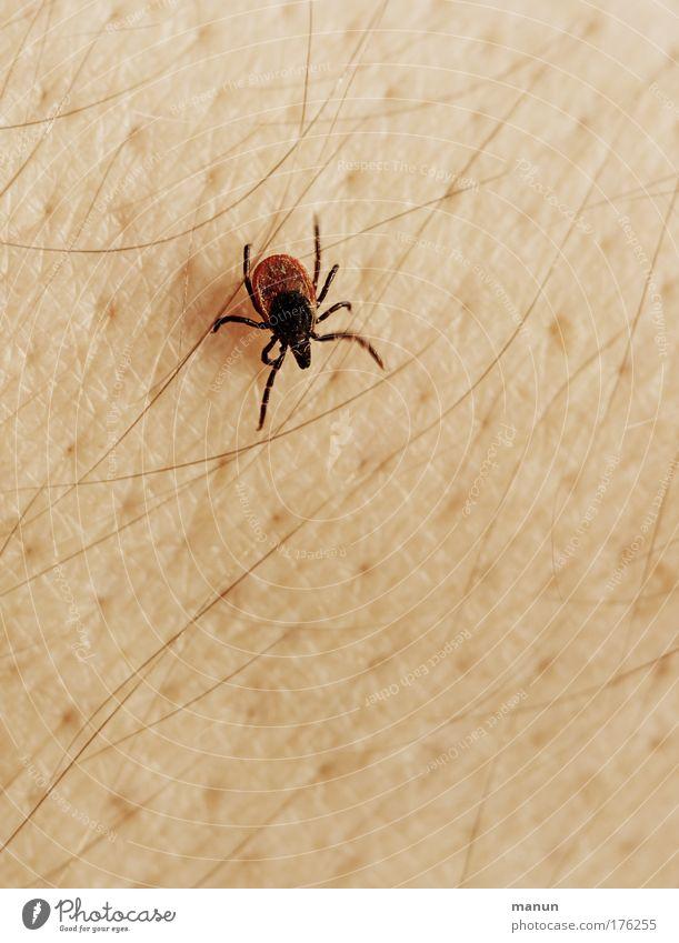 Mistvieh Sommer Tier Angst Wildtier Haut gefährlich authentisch bedrohlich Schutz Schmerz Zerstörung Sorge Ekel krabbeln Ärger Schädlinge