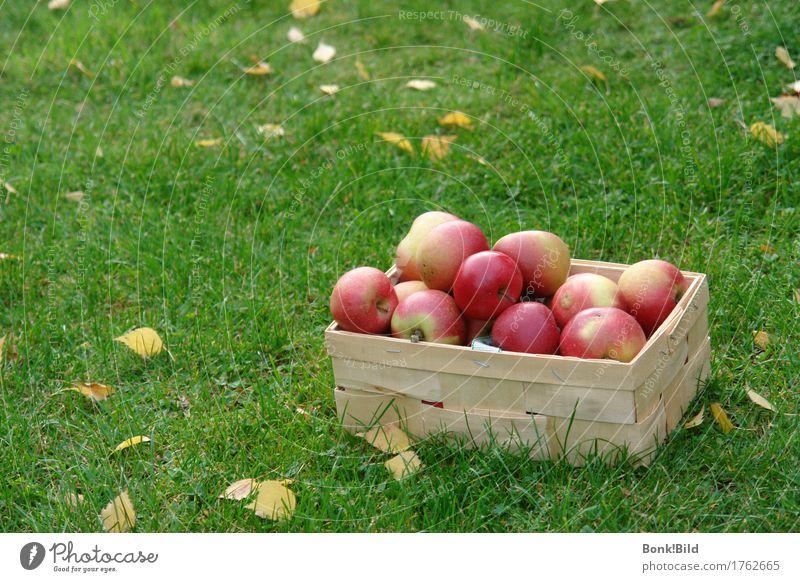 Apfelernte kaufen harmonisch Zufriedenheit Sinnesorgane Garten Oktoberfest Erntedankfest Fröhlichkeit frisch historisch saftig gelb gold grün rot Stimmung Glück