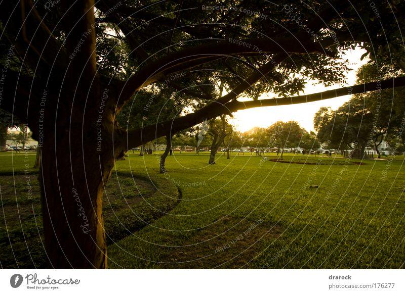 Natur grün Baum Pflanze Freude gelb Umwelt Landschaft Gras Garten Park braun natürlich Hauptstadt Reinheit Südamerika