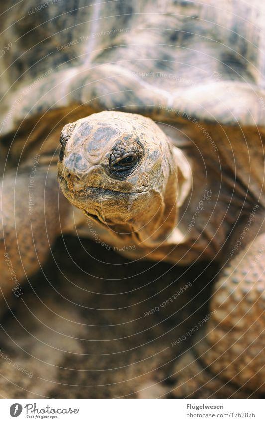 In Gedenken an Schildkröte Tier Tierjunges Ernährung Wildtier trinken Tierhaut tierisch Tiergesicht Zoo gemütlich Pfote krabbeln Tierzucht langsam Tierliebe