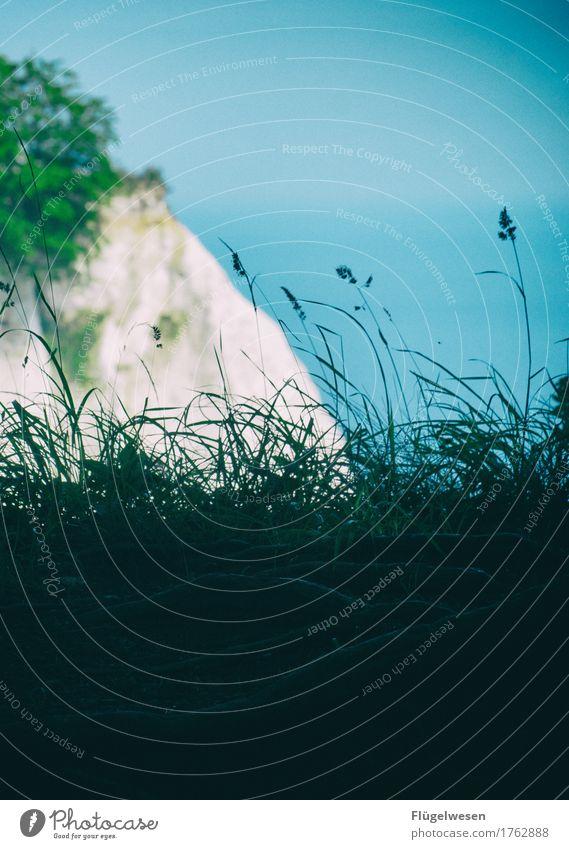Rügen (4) Kreide Kreidefelsen Wald Klippe Felsen Strand Sandstrand Ostsee Meer Sommer Ferien & Urlaub & Reisen Ausflug Sehenswürdigkeit Aussicht Wellen Insel