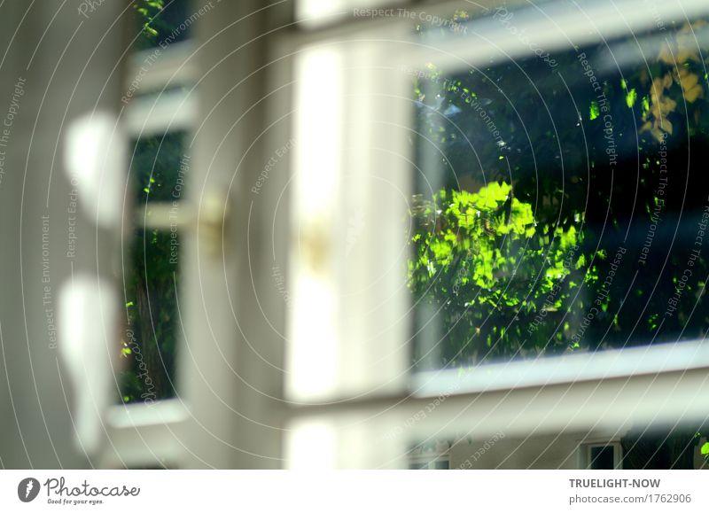 Blick ins Grüne Natur Pflanze Sommer grün weiß Baum Blatt ruhig Fenster Umwelt Leben Religion & Glaube Glück Garten grau Park