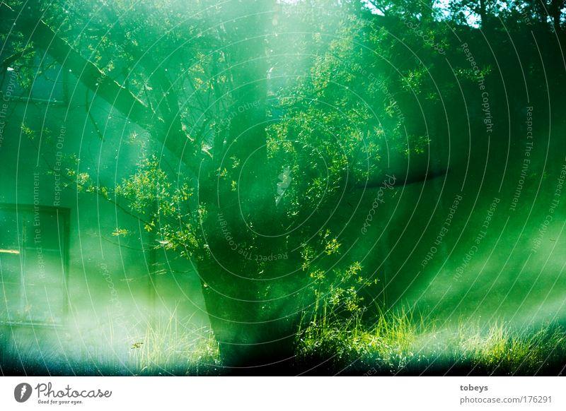Vision Wasser grün Teich Küste Fisch Reflexion & Spiegelung Baum Sträucher Fenster Haus träumen Surrealismus Schatten Ast falsch Farbfoto Außenaufnahme