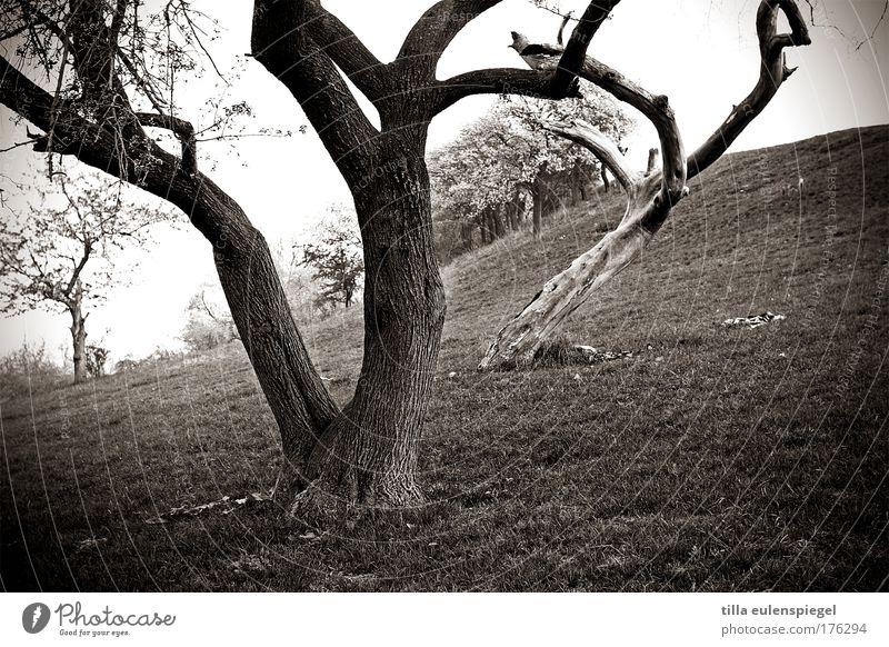 /// Natur weiß Baum schwarz dunkel kalt Wiese Wege & Pfade Landschaft Umwelt Zeit Wachstum einzigartig außergewöhnlich Hügel schlechtes Wetter