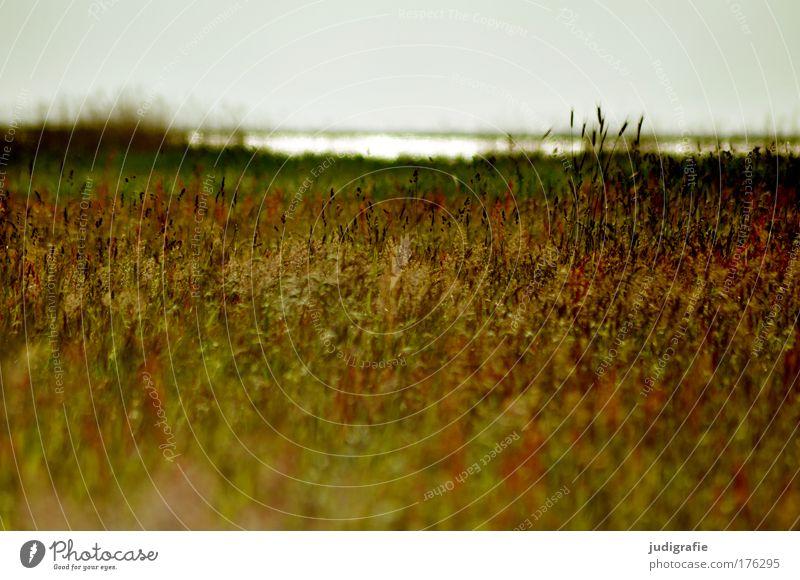 Wiese am Bodden Natur Wasser schön Himmel Pflanze Sommer Wiese Gras Traurigkeit See Landschaft Küste Umwelt Romantik wild natürlich