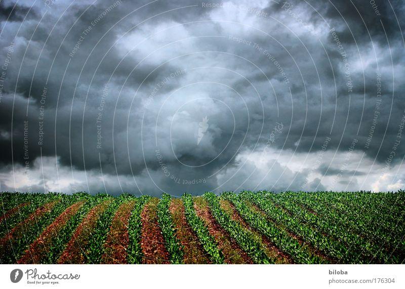 Mitten im Sturm Natur Wasser Himmel weiß grün Pflanze Sommer schwarz grau Landschaft Luft Stimmung Kraft Feld Angst Wetter
