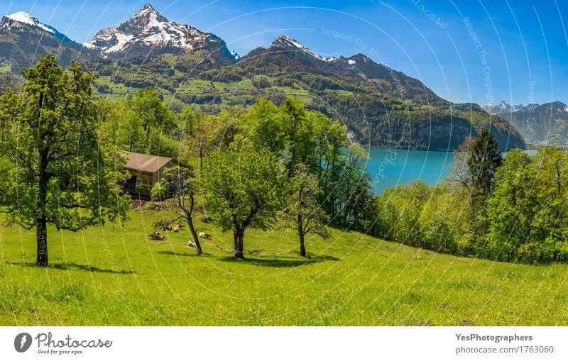 Schweizer Alpenlandschaft Natur Ferien & Urlaub & Reisen Sommer schön Sonne Baum Landschaft Erholung Berge u. Gebirge Wiese Gras See Tourismus Aussicht Europa