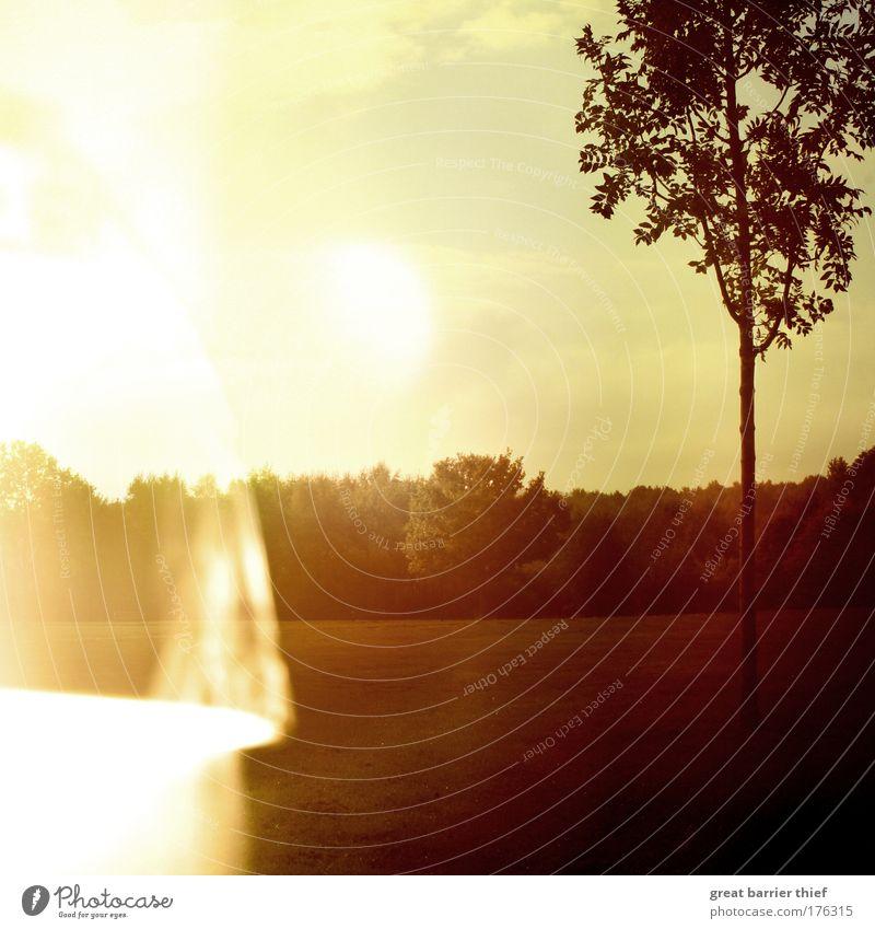 anhaltspunkt Umwelt Natur Landschaft Himmel Wolken Horizont Herbst Wetter Schönes Wetter Baum Wiese Wald außergewöhnlich einzigartig Wärme braun mehrfarbig gelb