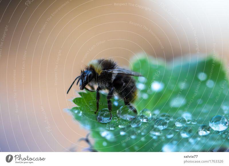 Frühaufsteher Natur Pflanze Sommer grün Wasser Blatt Tier Umwelt Leben Frühling Garten braun frisch Wildtier Beginn Wassertropfen