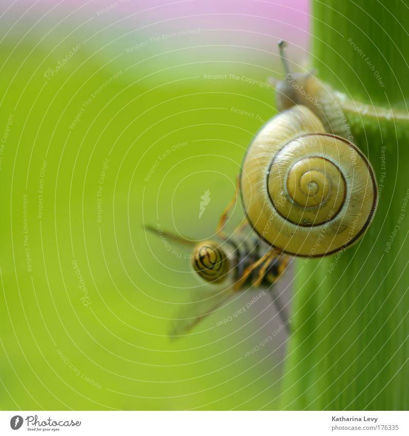 begegnung der giganten grün Pflanze Tier gelb Leben Freundschaft Zusammensein klein authentisch rein wild berühren Neugier Stengel festhalten Biene
