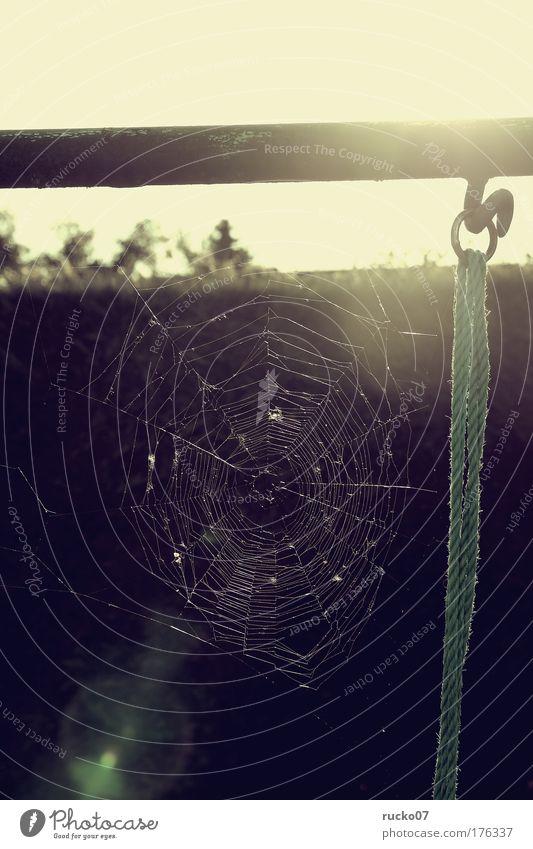 Vorsicht Falle! Angst ästhetisch bedrohlich Netz gruselig Ekel
