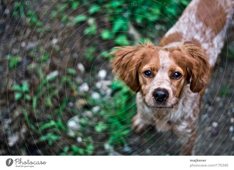 grün weiß schön Hund Tier Glück braun Tierjunges warten Fröhlichkeit Erfolg stehen Hoffnung Tiergesicht nah Vertrauen