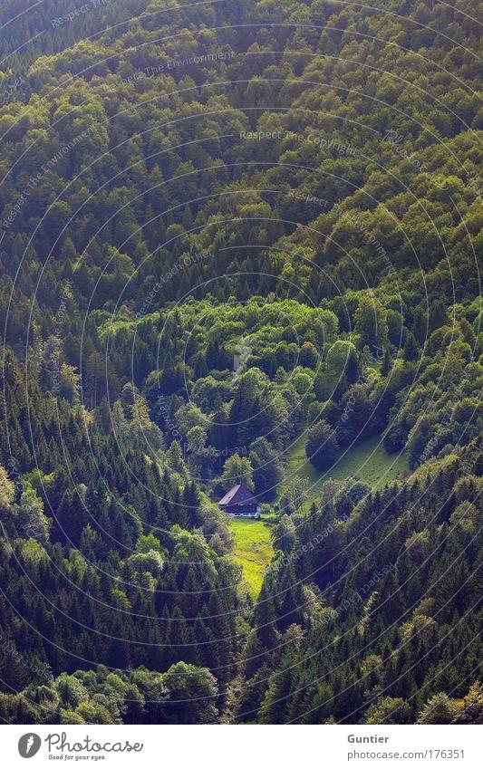 Einsamkeit Natur Baum grün Pflanze Sommer Haus schwarz Wald Gefühle Berge u. Gebirge Freiheit Landschaft Stimmung Angst Bauernhof
