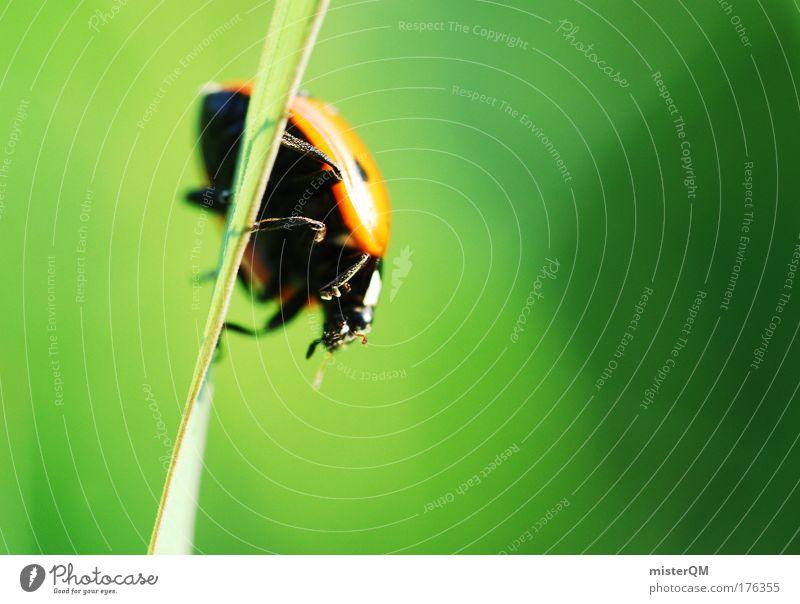 Oder doch besser runter... Natur grün Tier Umwelt Wiese Gras klein Erde Wetter Perspektive Suche Klettern entdecken Umweltschutz Käfer krabbeln