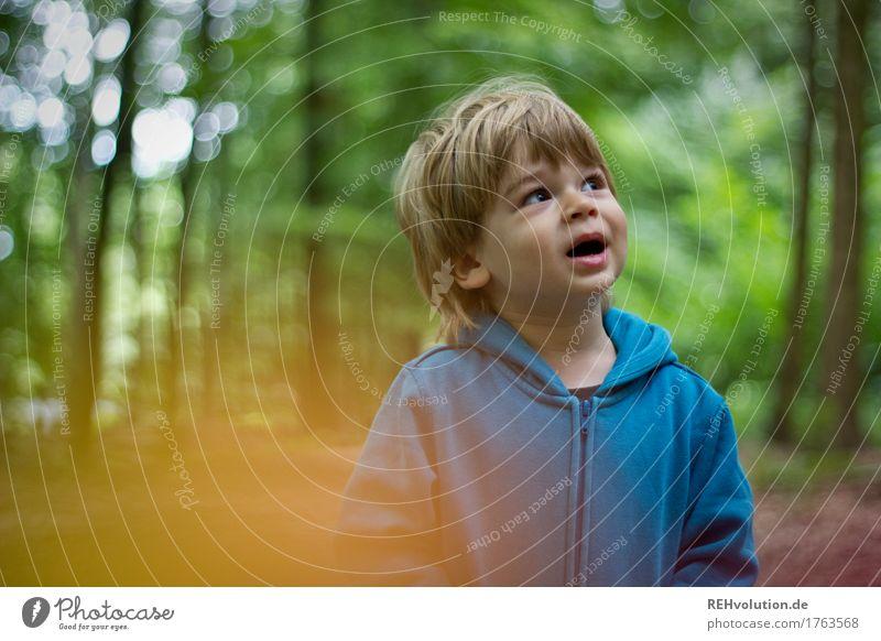 im Wald Mensch maskulin Kind Kleinkind Junge Kindheit Gesicht 1 1-3 Jahre Umwelt Natur Landschaft Pullover entdecken sprechen authentisch Freundlichkeit