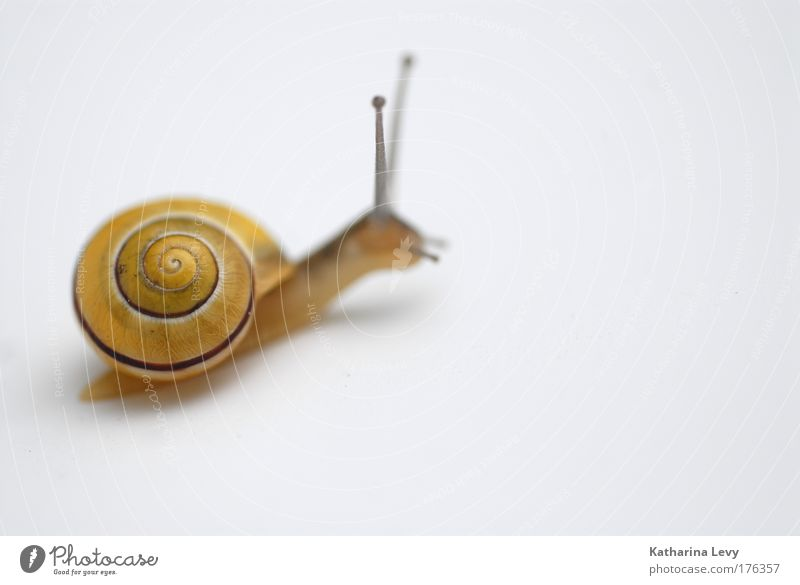 schneggi Natur Einsamkeit Tier gelb Bewegung klein Tierjunges warten Fröhlichkeit Perspektive Geschwindigkeit Sehnsucht Neugier Schnecke krabbeln Identität