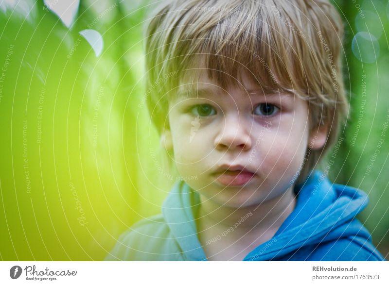 im Wald Mensch Kind Natur blau grün Gesicht Umwelt natürlich Junge klein Haare & Frisuren maskulin blond Kindheit niedlich