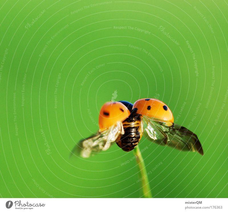auf und davon. Sommer Tier klein Kunst fliegen Beginn Zukunft Flügel Technik & Technologie Insekt Freisteller leicht Abheben Käfer Karriere
