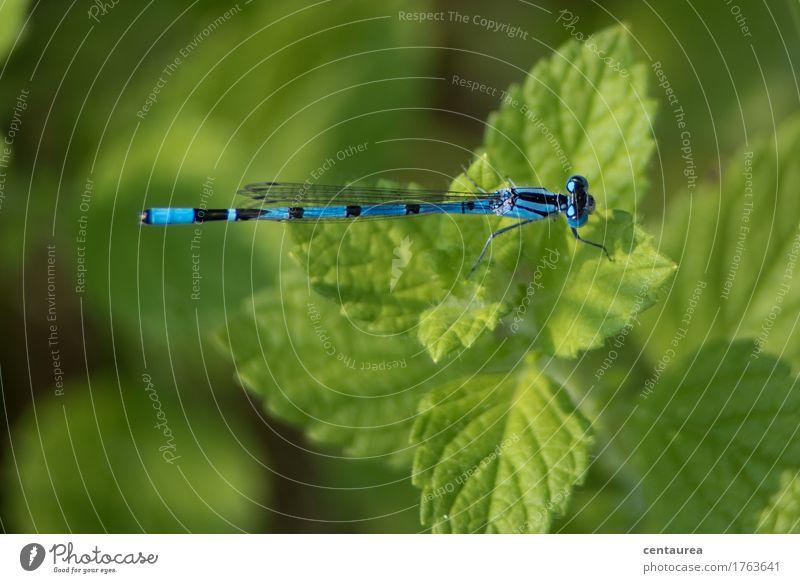 Pause Natur Pflanze blau grün schön Erholung Tier schwarz Umwelt Wiese Garten Park Zufriedenheit Wildtier ästhetisch Flügel