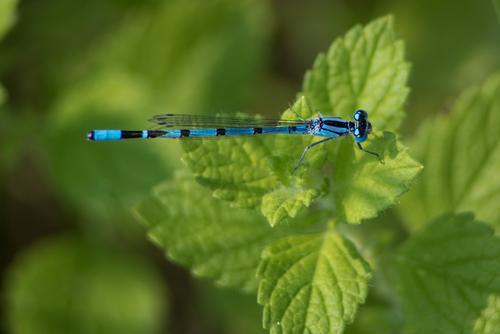 Pause Umwelt Natur Tier Pflanze Garten Park Wiese Seeufer Flussufer Wildtier Flügel 1 Erholung ästhetisch schön nachhaltig dünn blau grün schwarz Zufriedenheit