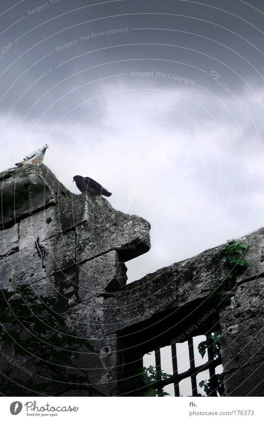 Gut & Böse Natur alt Himmel grün blau schwarz Tier dunkel kalt Herbst Wand Fenster grau Stein Mauer sitzen