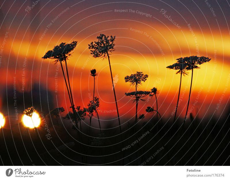 Abendrot Natur Himmel Blume Pflanze rot Sommer schwarz Wolken dunkel Herbst Wiese Blüte Gras Wärme Landschaft orange
