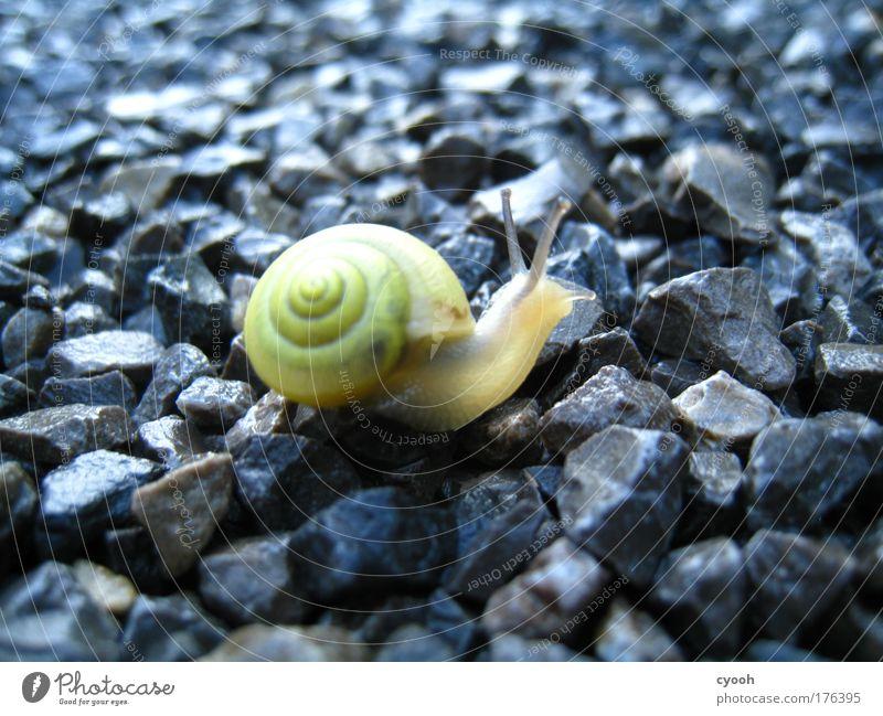 kleine Schnecke Natur schön Tier Stein Wege & Pfade Regen weich zart Neugier Schnecke Stolz zerbrechlich Ausdauer schwer fleißig filigran