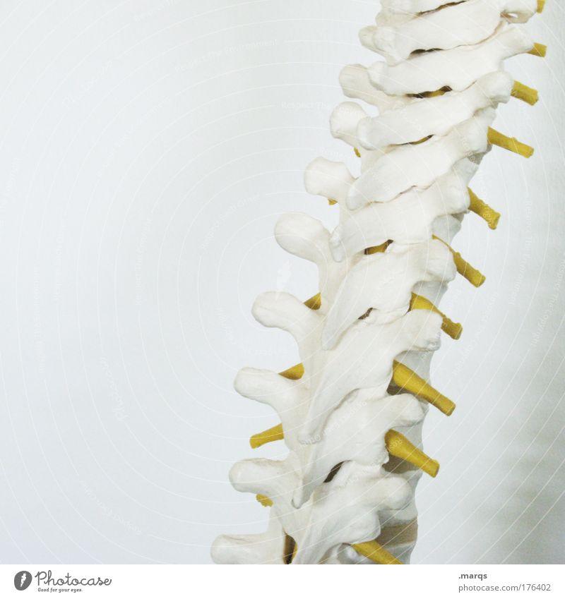 Spine Farbfoto Textfreiraum links Krankheit Leben Wohlgefühl Kur 1 Mensch alt weiß beweglich Schmerz Stress Schwäche Schwerpunkt Anatomie Skelett Wirbelsäule