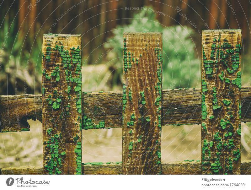 Grünspan Zaun Holzbrett Moos morsch Gartenzaun grün holzig Wilder Westen Saloon Amerika USA Holzleiste Leiste Schneidebrett Zaunpfahl Tischler Zimmerer Grenze