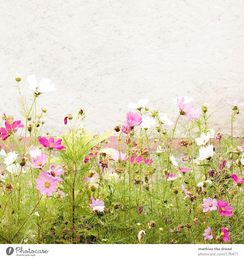 PINK IS PRETTY Natur schön weiß Blume Pflanze Sommer Tier Wiese Blüte Gras Frühling Garten Park Landschaft Zufriedenheit klein