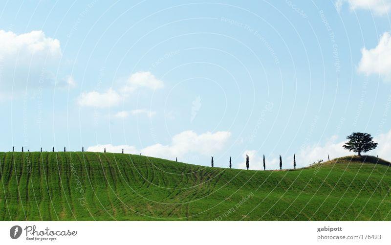 ~ Natur Himmel Baum grün blau Pflanze Sommer Wolken Wiese Landschaft Linie Feld Umwelt Horizont Klima Italien